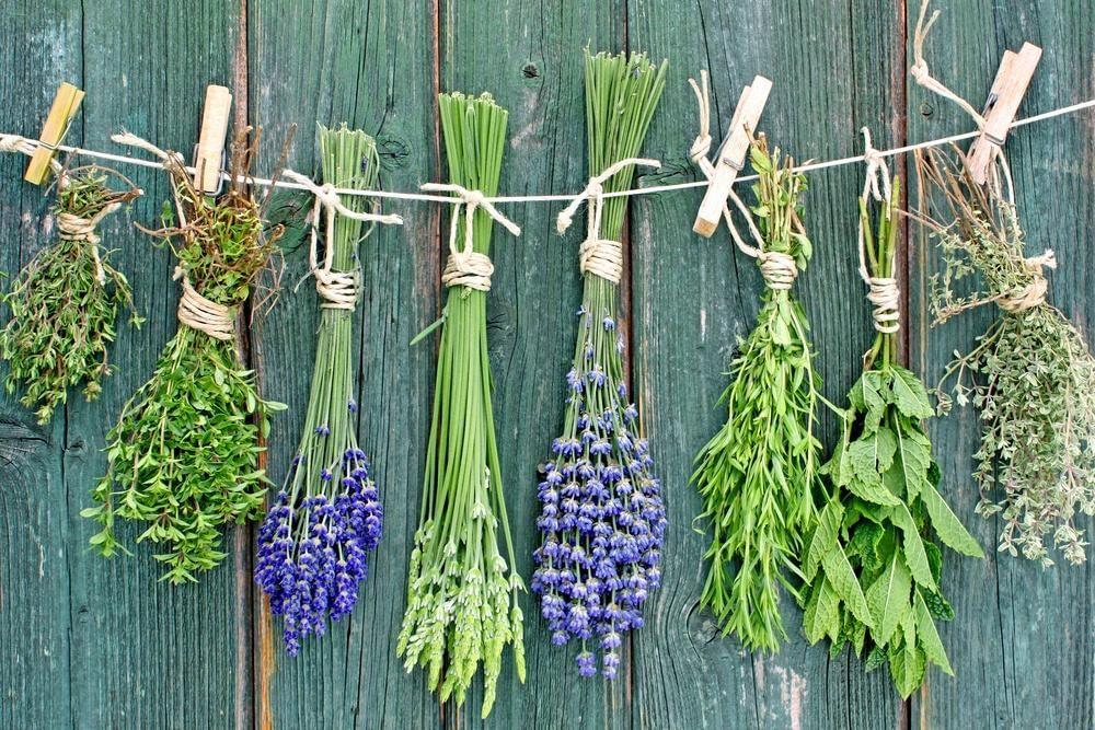 Травяные сборы − профилактика и лечение сердечно-сосудистых заболеваний