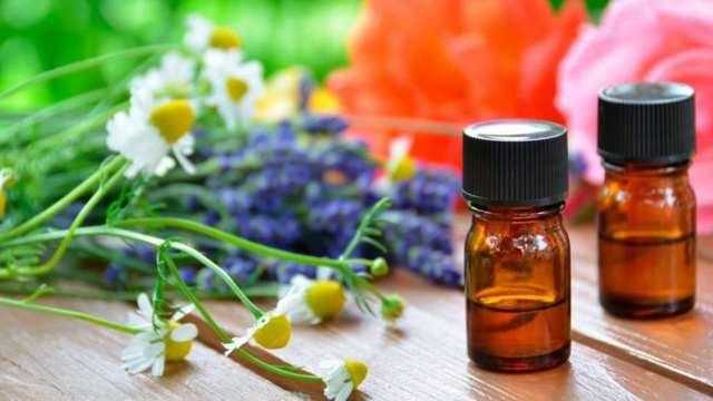 Природный антисептик – в каких лекарственных растениях он содержится?