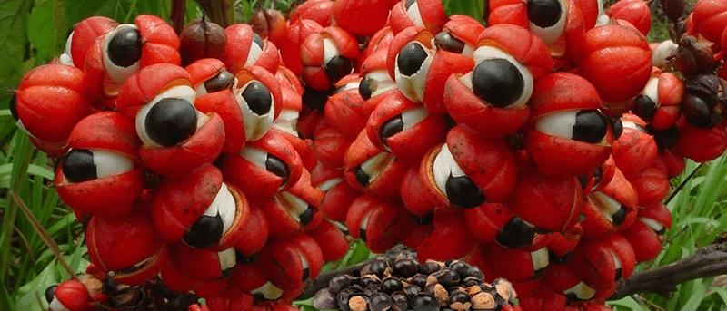 Купить биологические добавски к пище с гуараной в интернет магазине витаминов и БАДов