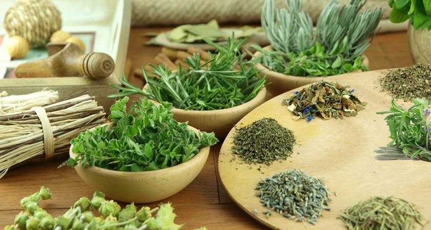 Худеем при помощи трав – полезные рекомендации