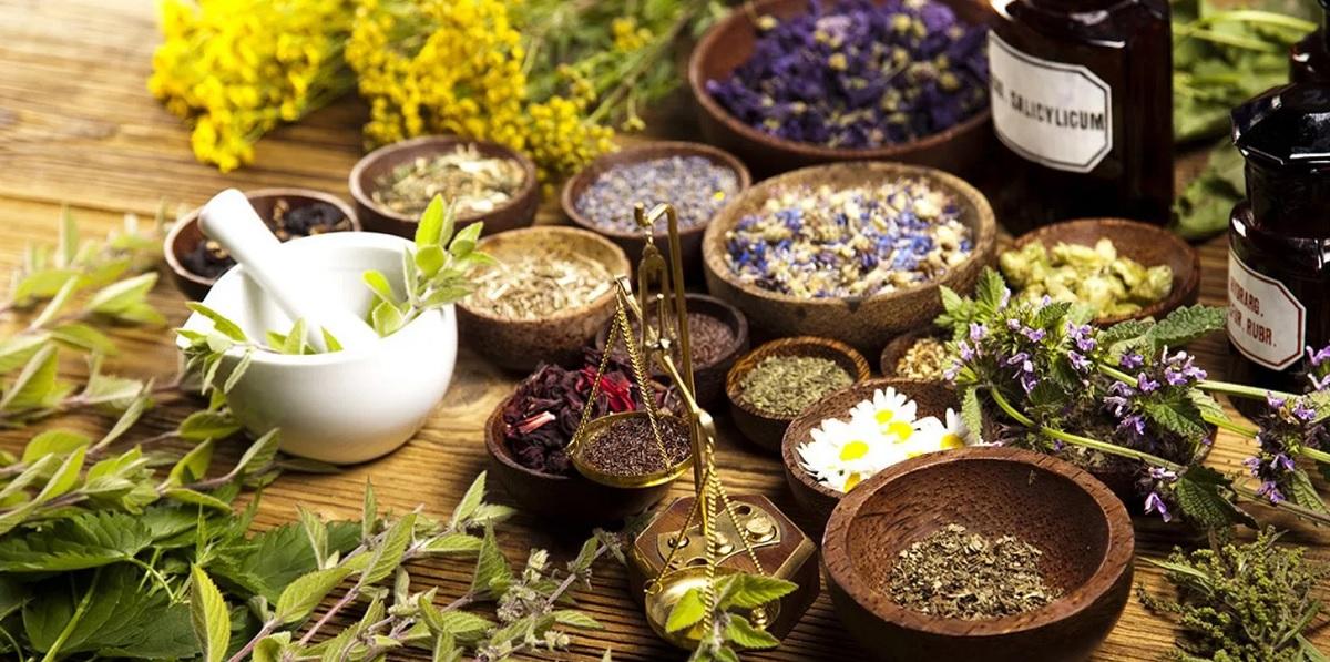Какие лекарственные травы стоит применять при тромбофлебите